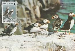 Carte Maximum - Oiseaux - Puffins - Isle Of Man - - Oiseaux