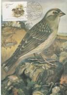Carte Maximum - Oiseaux - Petronia Petronia - Portugal - Madeira - Moineaux