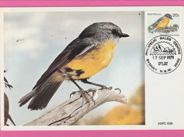 Carte Maximum - Oiseaux - Eastern Yellow Robin - Australie - Australia - Oiseaux