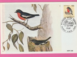 Carte Maximum - Oiseaux - Flame Robin - Australie - Australia - Oiseaux