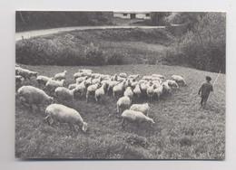 Sur Le Chemin De Retour à La Bergerie - CPM Collection Vie Traditionnelle - Cliché R. Poulain - Animée - Breeding