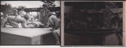 Foto + Celluloid Negatives, Of Various Animals, Big Cats, Birds, Zoo, Bears, Monkeys Mono Aap - Fotos