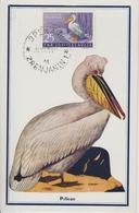 Yougoslavie Carte Maximum Oiseaux 1954 Pélican 648 - Cartes-maximum