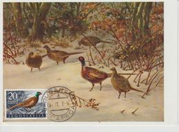 Yougoslavie Carte Maximum Oiseaux 1958 Faisan 746 - Cartes-maximum
