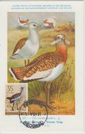 Yougoslavie Carte Maximum Oiseaux 1958 Outarde 749 - Cartes-maximum