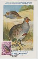 Yougoslavie Carte Maximum Oiseaux 1958 Perdrix 750 - Cartes-maximum