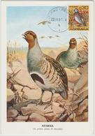 Yougoslavie Carte Maximum Oiseaux 1967 Perdrix 1122 - Cartes-maximum
