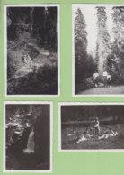 FORET DU RISOUX (Jura), Août 1933 : 4 Photos - Lieux