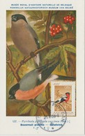 Yougoslavie Carte Maximum Oiseaux 1968 Bouvreuil 1177 - Cartes-maximum