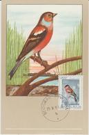 Yougoslavie Carte Maximum Oiseaux 1968 Pinson 1179 - Cartes-maximum