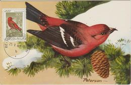 Yougoslavie Carte Maximum Oiseaux 1968 Bec Croisé 1181 - Cartes-maximum