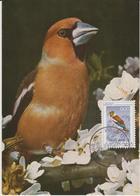 Yougoslavie Carte Maximum Oiseaux 1968 Gros Bec 1182 - Cartes-maximum
