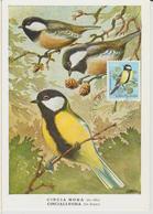 Yougoslavie Carte Maximum Oiseaux 1974 Mésange 1443 - Cartes-maximum
