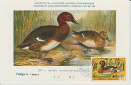 Yougoslavie Carte Maximum Oiseaux 1976 Sarcelle 1533 - Cartes-maximum