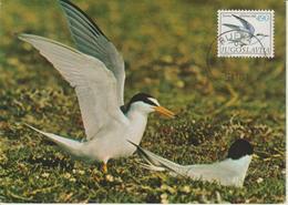 Yougoslavie Carte Maximum Oiseaux 1980 Sterne 1719 - Cartes-maximum