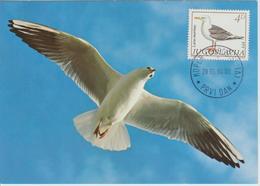 Yougoslavie Carte Maximum Oiseaux 1984 Mouette 1935 - Cartes-maximum