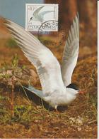 Yougoslavie Carte Maximum Oiseaux 1984 Sterne 1938 - Cartes-maximum