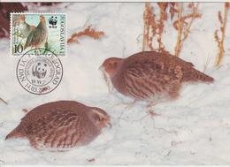 Yougoslavie Carte Maximum Oiseaux 2000 Perdrix 2815 - Cartes-maximum