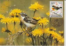 Yougoslavie Carte Maximum Oiseaux 2002 Traquet 2907 - Cartes-maximum