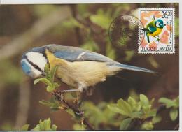 Yougoslavie Carte Maximum Oiseaux 2002 Mésange 2908 - Cartes-maximum