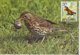 Yougoslavie Carte Maximum Oiseaux 2002 Grive 2909 - Cartes-maximum