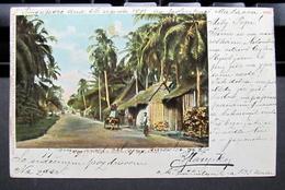 Indonesia-Riau Islands: Galang, Country Road Scenery  1903 - Indonésie