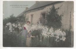 THD.465/ Le Bonheur Aux Champs - La Cueillette Des Lys - Cultivation