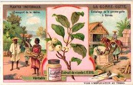 0969 Liebig 6 Cards- C1909  Plants Used For Colours-Plantes Tinctoriales-Rose-Garance-Gomme-Gutte-Bornéo-Pastel-Indigo - Liebig