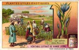 0970 Liebig 6 Cards- C1909  Useful Exotic Plants-Plantes Utiles Exotiques-Safran-Maïs-Ravenala-Madagascar-Bamboe-Manioc - Liebig