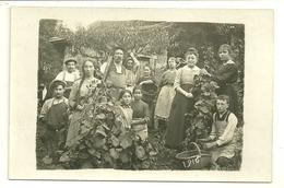 AGRICULTURE CARTE PHOTO 1916 VENDANGES VENDANGEURS VIN VIGNES METIER - Vines