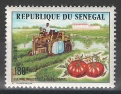 Sénégal - YT 435 ** - 1976 - Culture Industrielle De La Tomate - Sénégal (1960-...)