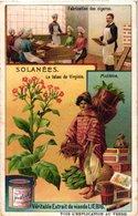 0976 Liebig 6 Cards- C1909-Solanaceae-Deadly Nightshade Family-Solanées-Belladone-Tomate-Piment-Datura-pomme De Terre - Liebig