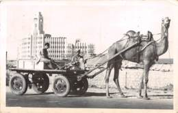 Pakistan / 16 - Karachi - Kamel Cart - Pakistan