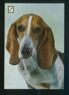 Ed. Fisa. 2ª Serie *Animales Domésticos* Nº 9. Nueva. - Perros