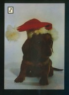Ed. Fisa. 1ª Serie *Animales Domésticos* Nº 2. Nueva. - Perros