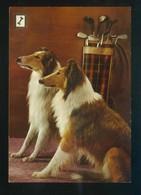 Ed. Fisa. 2ª Serie *Animales Domésticos* Nº 6. Nueva. - Perros