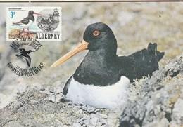 Carte Maximum - Oiseaux - Oystercatcher - Alderney - Oiseaux