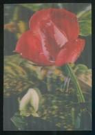 Postal Efecto 3D. Ed. Fisa Nº R-26. Escrita. - Stereoscope Cards