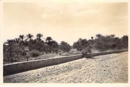 DJIBOUTI  - Galmeraie D'AMBOULI - CPSM Photo Format CPA - - Djibouti