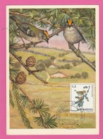 Carte Maximum - Oiseaux - Roitelet Hupé - San Marino - 1972 - Oiseaux