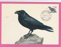 Carte Maximum - Oiseaux - Corbeau - Islande - Iceland - Oiseaux