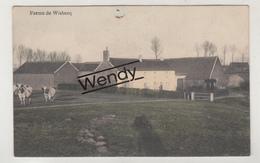 Wisbecq (ferme De Wisbecq - Color - 1902) - Rebecq