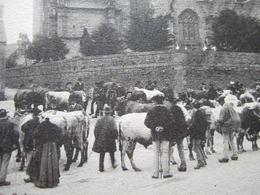 """29 - SAINT THEGONNEC - """" UN MARCHE DE BESTIAUX """" - L' EGLISE, COTE NORD - - Saint-Thégonnec"""