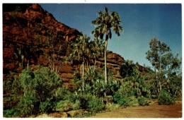 Ref 1260 - Postcard - Palm Valley - Northern Territory Australia - Australia