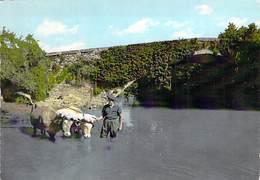 AGRICULTURE Paysans ( ATTELAGES ) SAINT PEE Sur NIVELLE : Attelage De BOEUFS - CPSM Dentelée Colorisée Grand Format - 64 - Equipos