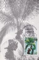 BOLIVIA, ECOLOGIA Y MEDIO AMBIENTE. PALMA DE DACTILES. MAXIMUM CARD 2004, BOLIVIA-CARD - BLEUP - Protección Del Medio Ambiente Y Del Clima
