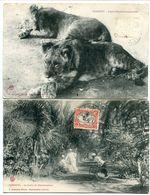 2 CPA 1908 - DJIBOUTI Lions D'Abyssinie Apprivoisés & Le Jardin Du Gouvernement ( Animée ) - Djibouti