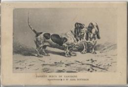 CPA - BASSETS BLEUS De GASCOGNE Appartenant à Mr Alain BOURBON (carte Illustrée) - Edition ? - Hunde