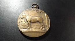 Médaille. Comité Agricole De Seneffe. Le Cheval De Trait Belge. 1939 - Belgique
