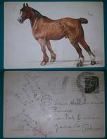 Cartolina Illustrata Cavallo. - (Firmata). Viaggiata 1917 - Cavalli